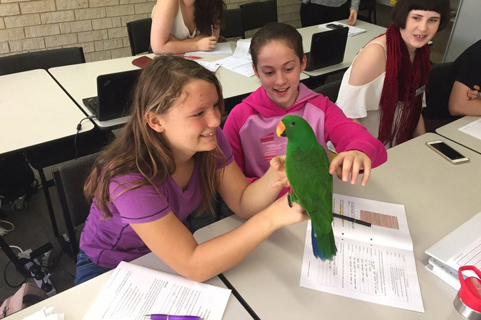 A parrot visits the Woy Woy learning hub